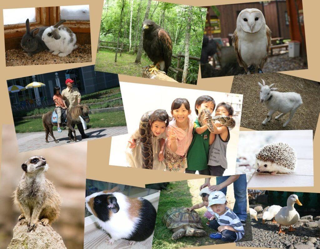様々な動物と触れ合う子供たち